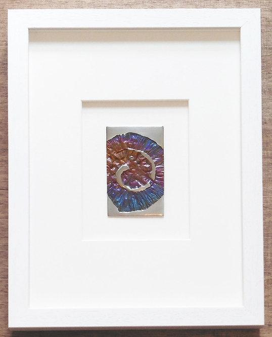 Multi Ammonite
