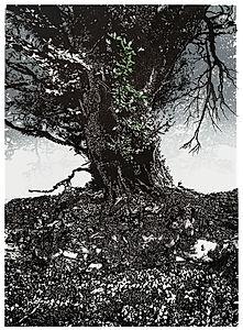 Dartmoor Hedgerow #5