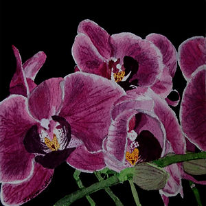 Chrissie's Orchid