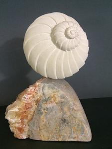 Ridged Shell