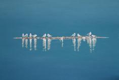 Resting Gulls