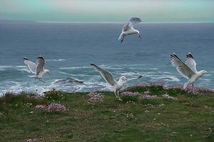Seagulls I