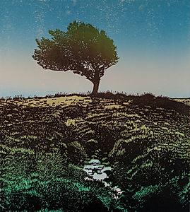 Holly Tree, Dartmoor