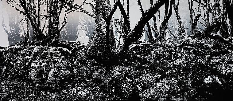 Dartmoor Hedgerow #3