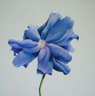 Fiore No 3