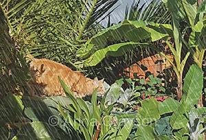 Tropical Plants with Jasper (after Henri Rousseau)