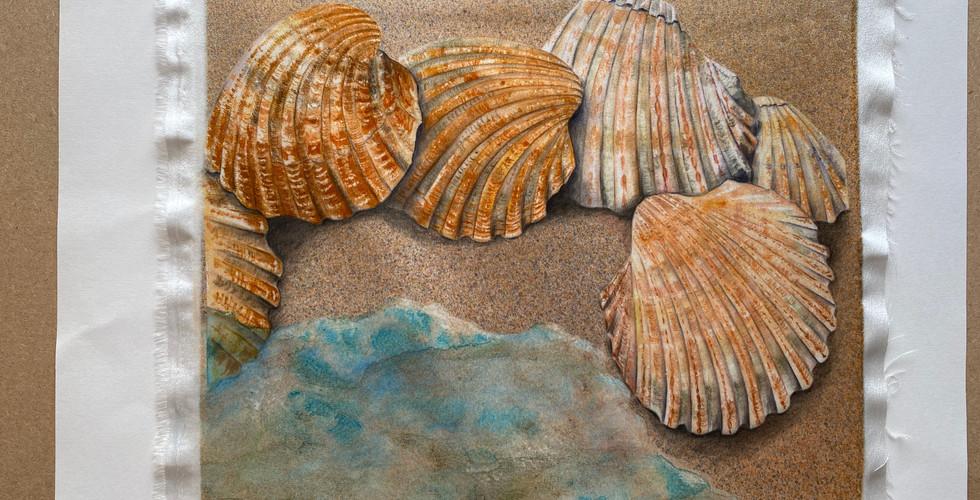 Tony's Shells