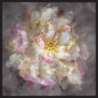 Cloud Rose
