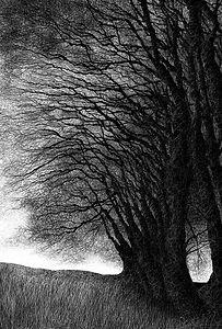 Batworthy Hedgerow, Dartmoor
