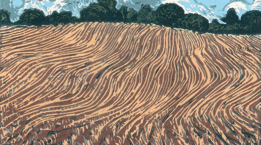 Devon Field, Autumn