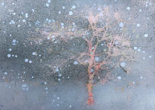 Winter Sapling