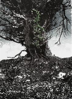 Dartmoor Hedgerow #5 - Gidleigh