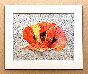 Oriental Poppy 1