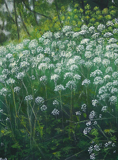 Cow Parsley and Alexanders