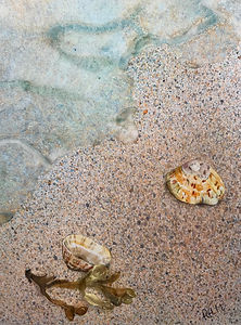 Two Limpets Apart