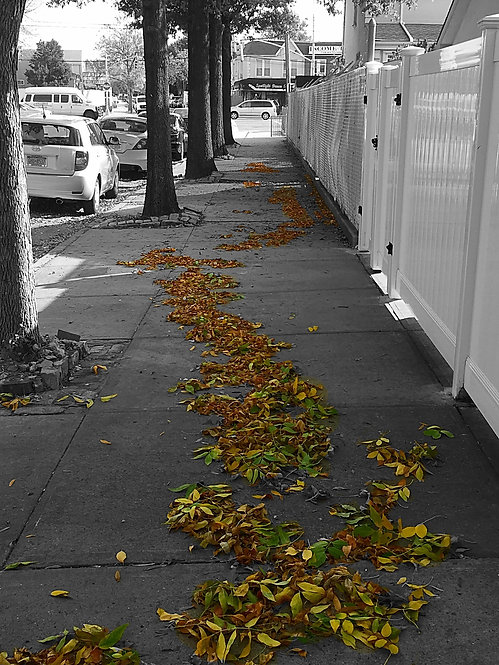 Line of Autumn