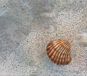 Solitary Cockle Shell on Broadsands Beach