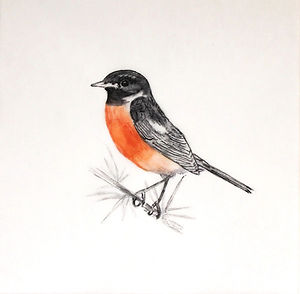 Tracing Coast and Contours - Stonechat