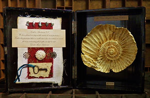 Miss Clara Knight's Curious Collections. Seashore Specimens (v)