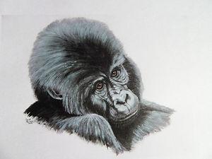 Juvenile Lowland Gorilla