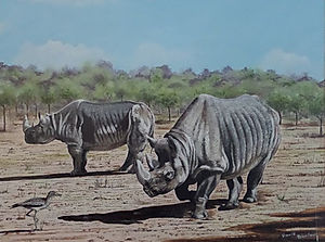 Black Rhinoceros and Stone Curlew
