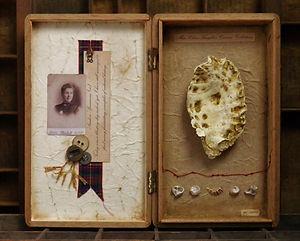 Miss Clara Knight's Curious Collections. Seashore Specimens (vi)