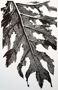 Lacy Tree Philodendron - Black Edition