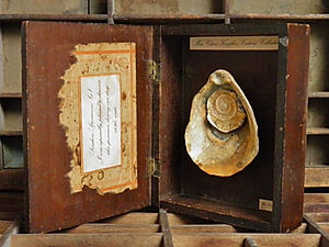 Miss Clara Knight's Curious Collections. Seashore Specimens (ii)