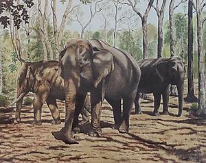 Bondla Forest - Asian Elephants