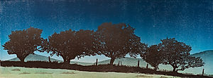 Dartmoor Hedgerow #1 - Blue
