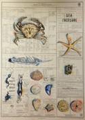 Sea Treasure: Treasure the Sea