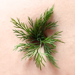 Dill (part of Navel Daze series)