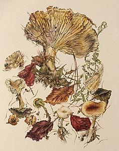 Haldon Forest Fungi