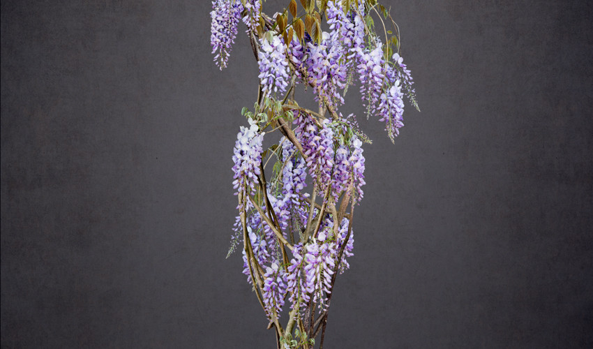 Wisteria - Missing Series