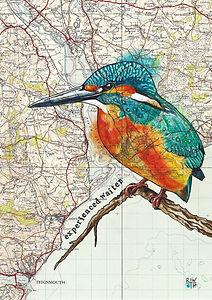 Topsham Kingfisher