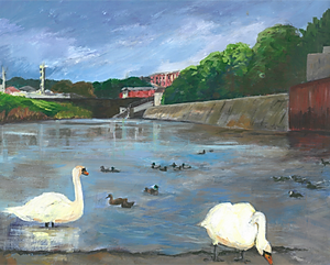 Swans and Ducks at Exeter Quay
