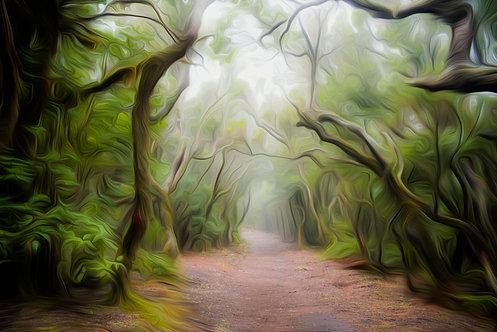 Foggy Walk II