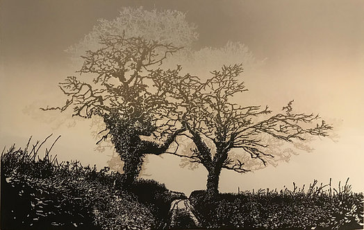Two Trees - South Hams