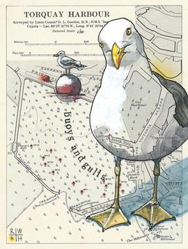 Torquay Harbour Gulls