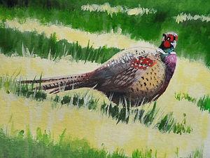 Pheasant In Sunshine