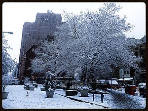 Snow Bank