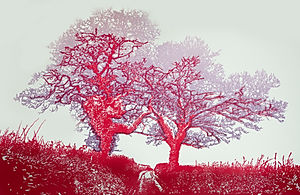 Two Trees, South Hams (Red edition)