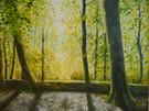 Spring' Haldon Forest
