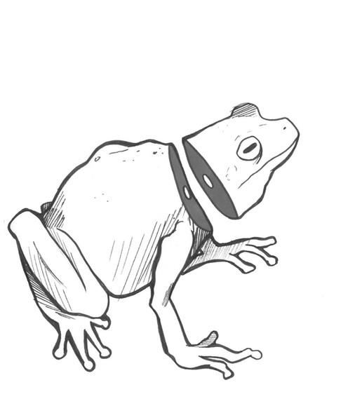 Sliced Frog