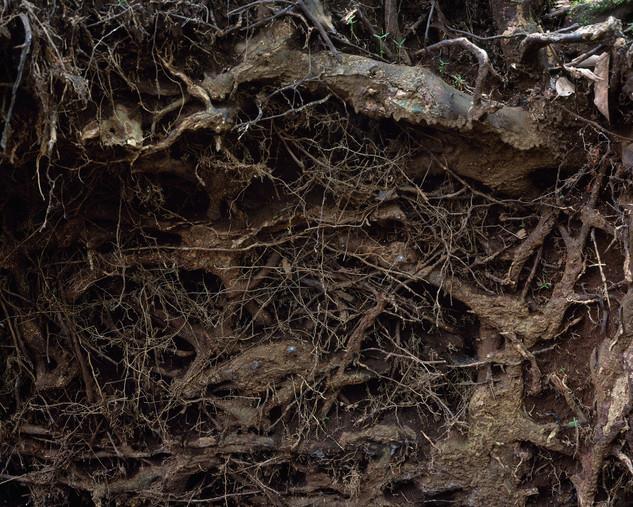 숲의 조각-2, 80x100cm, C print, 2014