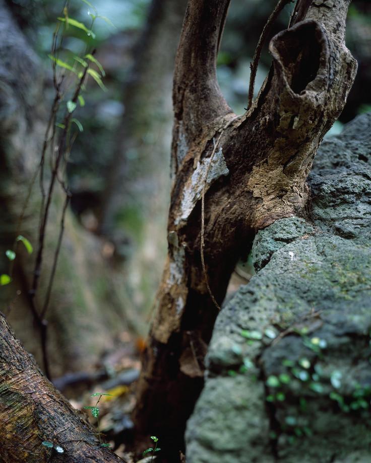 숲의 조각-3, 80x100cm, C print, 2014