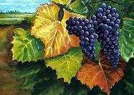 Sonoma_Harvest_web.jpg