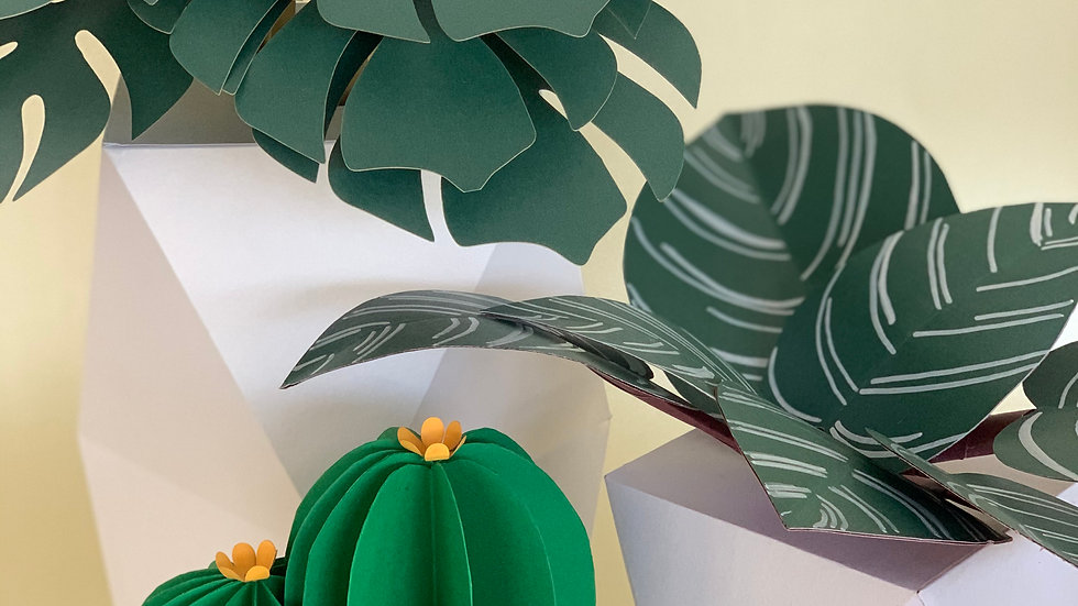 White Potted Plant & Succulent Set B