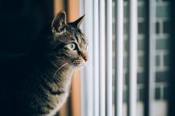 シェアハウスの猫(こうた)