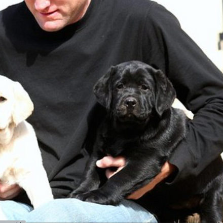 pups.png
